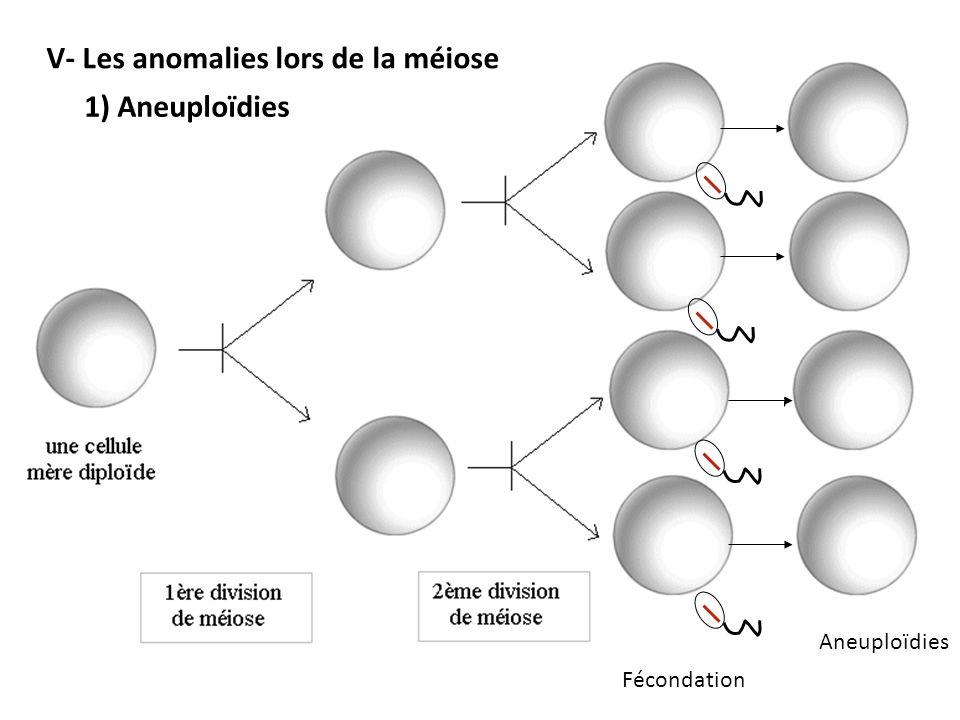 Aneuploïdies V- Les anomalies lors de la méiose 1) Aneuploïdies Fécondation