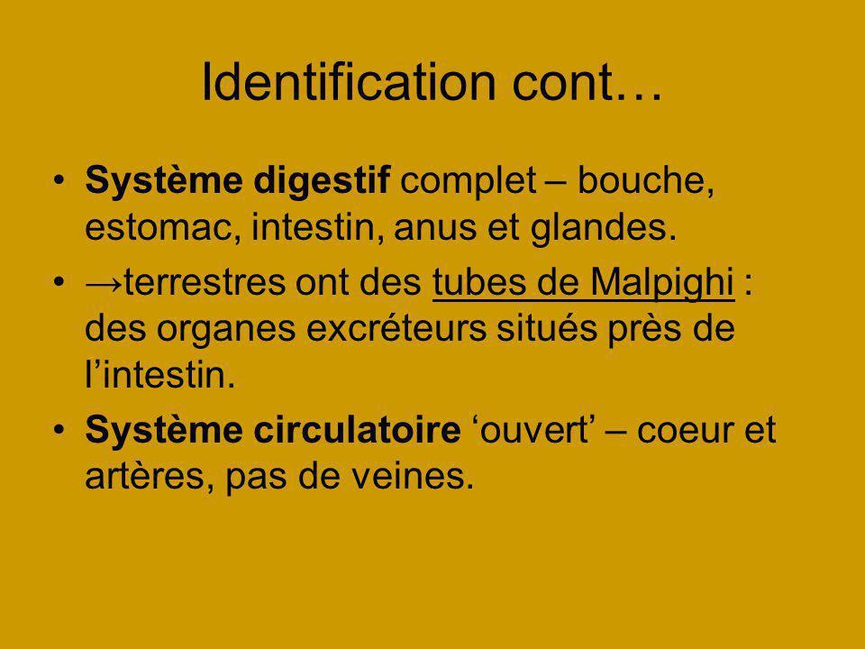 Identification cont… Système digestif complet – bouche, estomac, intestin, anus et glandes. terrestres ont des tubes de Malpighi : des organes excréte