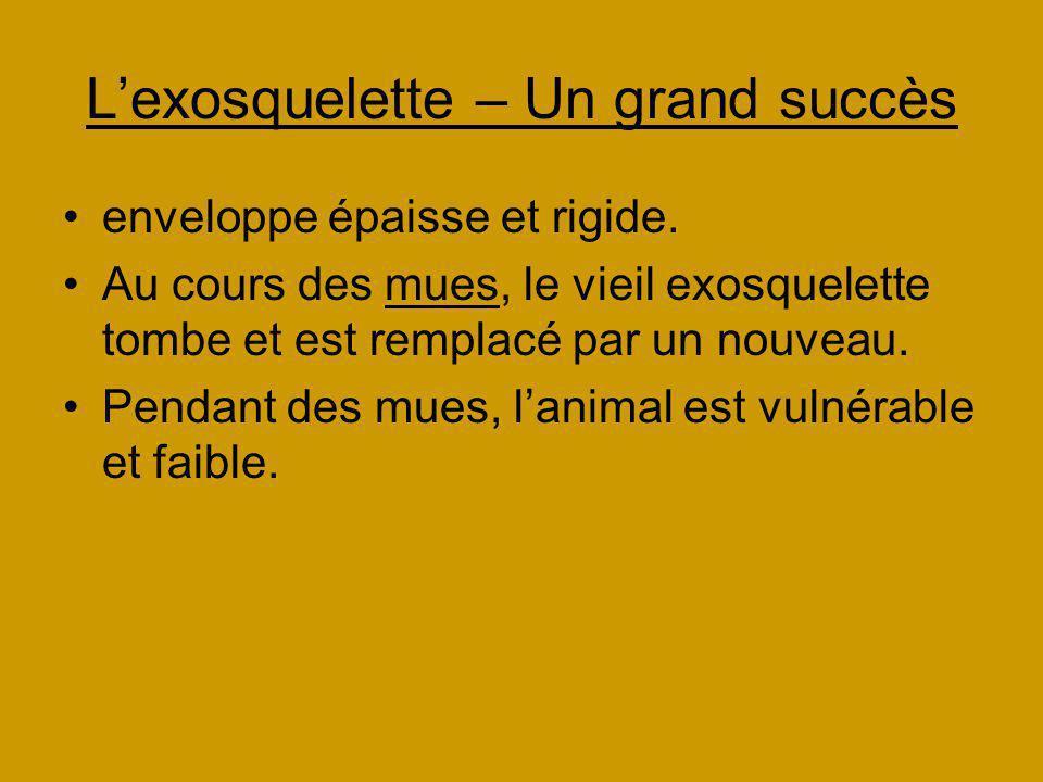 Lexosquelette – Un grand succès enveloppe épaisse et rigide. Au cours des mues, le vieil exosquelette tombe et est remplacé par un nouveau. Pendant de