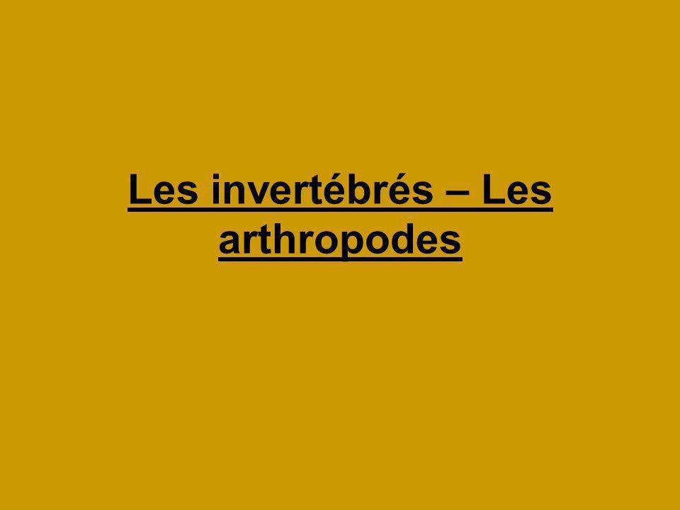 Les invertébrés – Les arthropodes