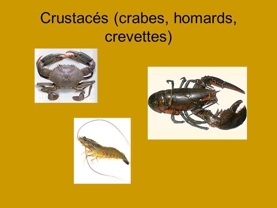 Crustacés (crabes, homards, crevettes)