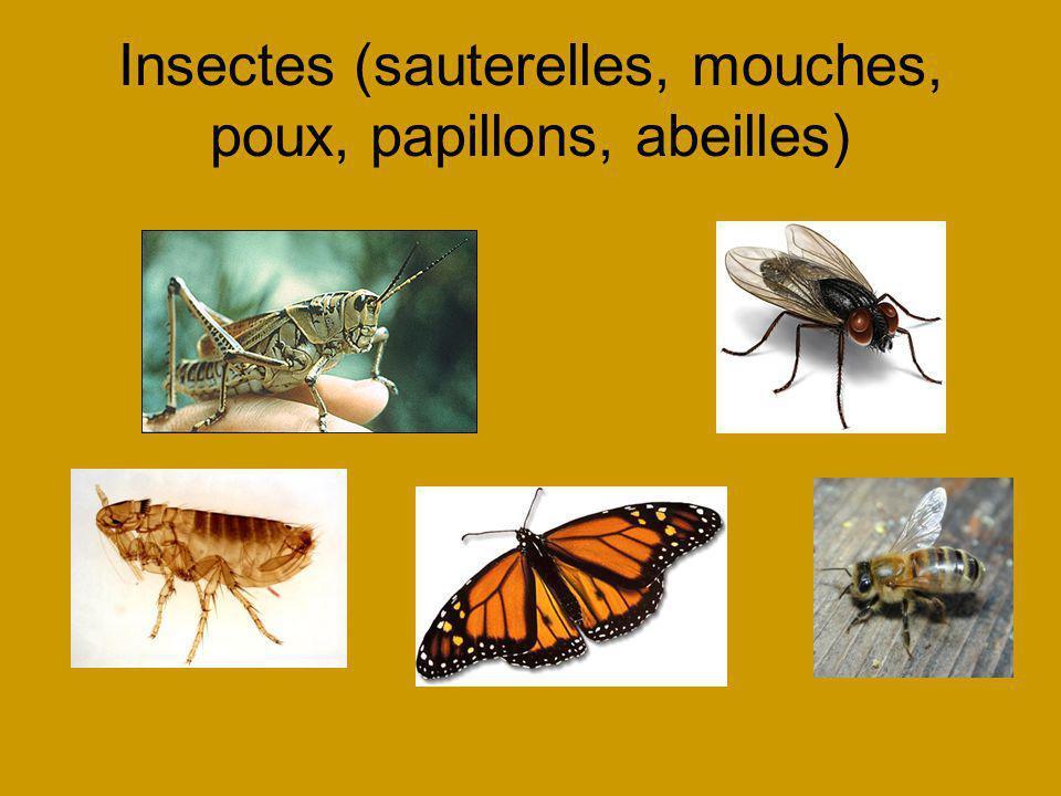 Insectes (sauterelles, mouches, poux, papillons, abeilles)