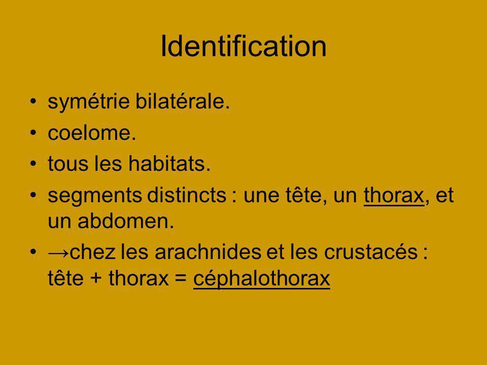 Identification symétrie bilatérale. coelome. tous les habitats. segments distincts : une tête, un thorax, et un abdomen. chez les arachnides et les cr