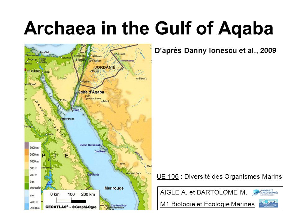 Archaea in the Gulf of Aqaba Daprès Danny Ionescu et al., 2009 UE 106 : Diversité des Organismes Marins AIGLE A. et BARTOLOME M. M1 Biologie et Ecolog