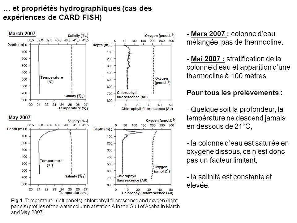 … et propriétés hydrographiques (cas des expériences de CARD FISH) - Mars 2007 : colonne deau mélangée, pas de thermocline. - Mai 2007 : stratificatio