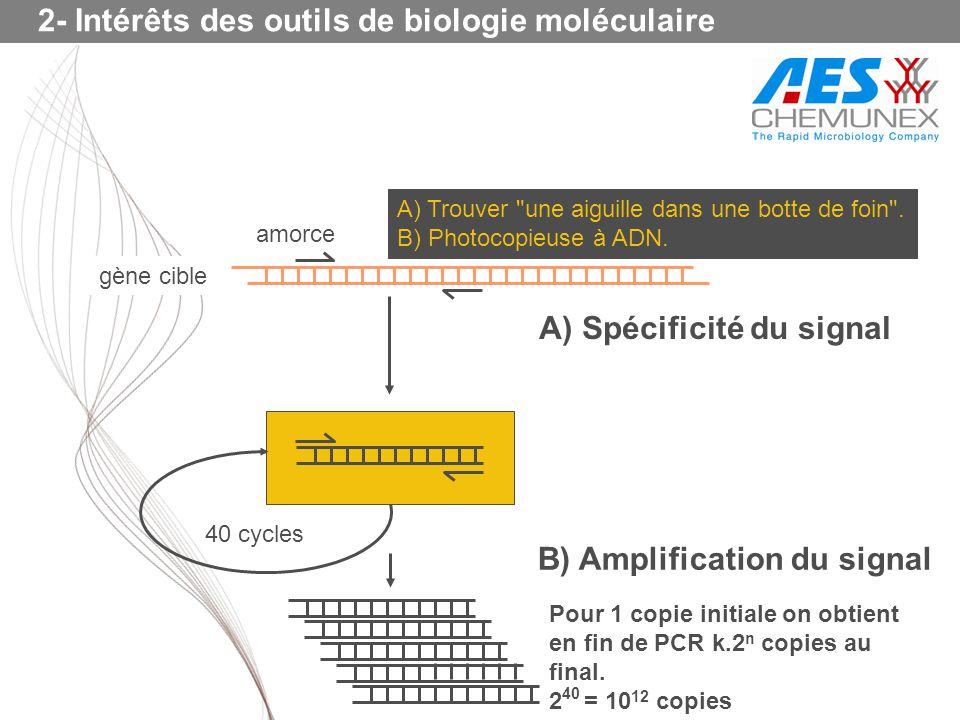 amorce 40 cycles B) Amplification du signal A) Spécificité du signal gène cible A) Trouver