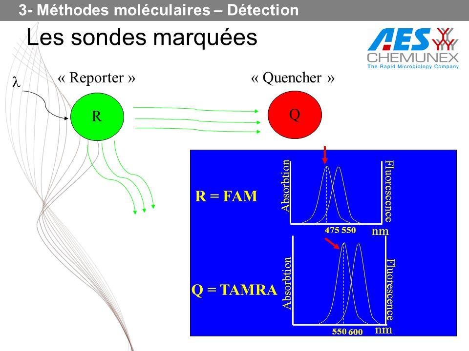 Les sondes marquées R « Reporter »« Quencher » Q nm Absorbtion Fluorescence 475 550 R = FAM nm 550 600 Absorbtion Fluorescence Q = TAMRA 3- Méthodes m