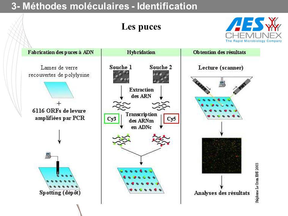 3- Méthodes moléculaires - Identification Les puces