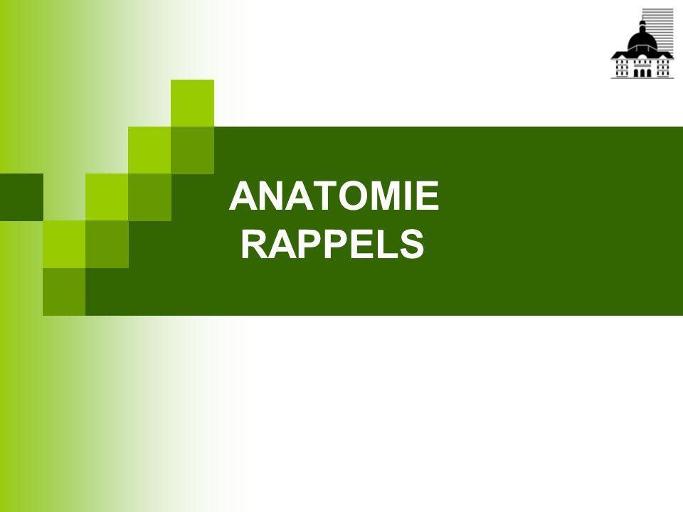 Traitement de la lithiase biliaire = sphinctérotomie endoscopique (2)