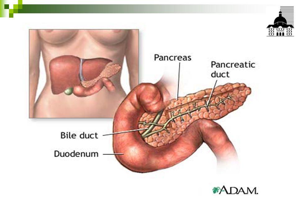 EXAMEN CLINIQUE Circonstance de découverte Ictère: compression du cholédoque dans les cancers de la tête Douleur: de type pancréatique, dans les cancers du corps ou de la queue AEG: dans tous les cas Diabète: révélatrice ou daggravation récente Diarrhée: rarement révélatrice Thrombophlébite Prurit Examen clinique Ictère nu, palpation dune vésicule dilatée Amaigrissement Masse épigastrique rarement