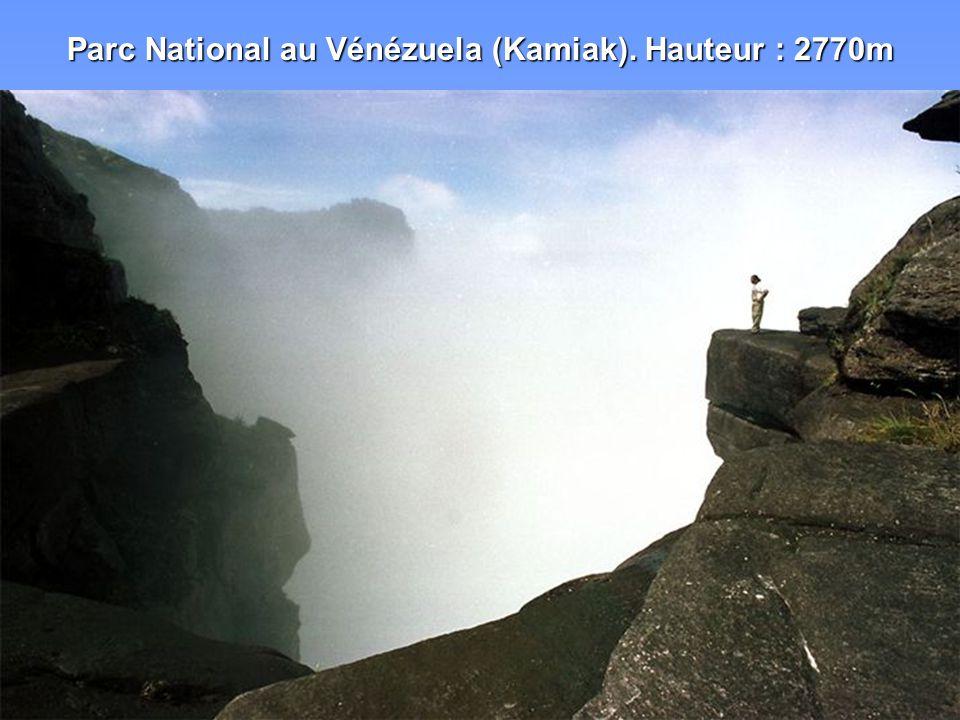 Parc National au Vénézuela (Kamiak). Hauteur : 2770m