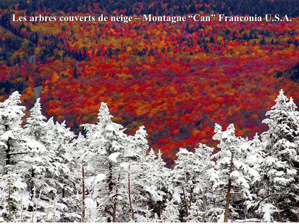 Les arbres couverts de neige – Montagne Can Franconia U.S.A.