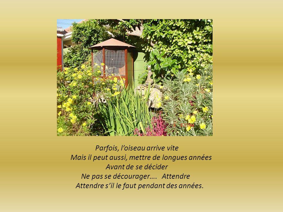 Placer ensuite la toile contre un arbre Dans un jardin Dans un bois Ou dans une foret Se cacher derrière larbre Sans rien dire Sans bouger…