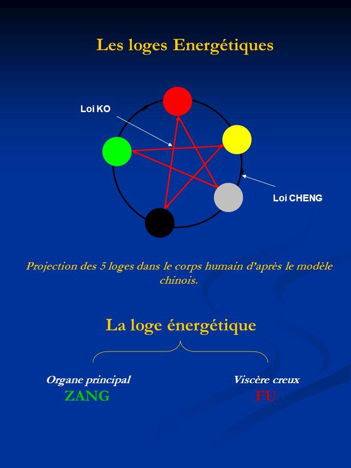 Les loges Energétiques Loi KO Loi CHENG Projection des 5 loges dans le corps humain daprès le modèle chinois. La loge énergétique Organe principal ZAN