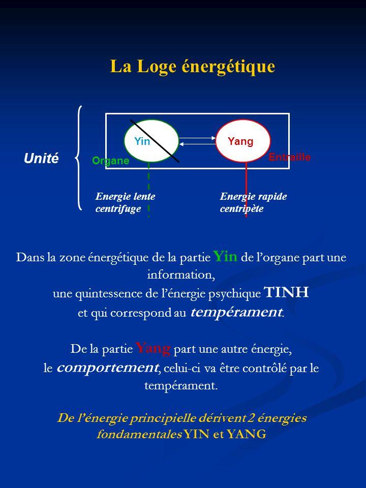La Loge énergétique Organe Entraille Yin Yang Energie lente centrifuge Energie rapide centripète Unité Dans la zone énergétique de la partie Yin de lo