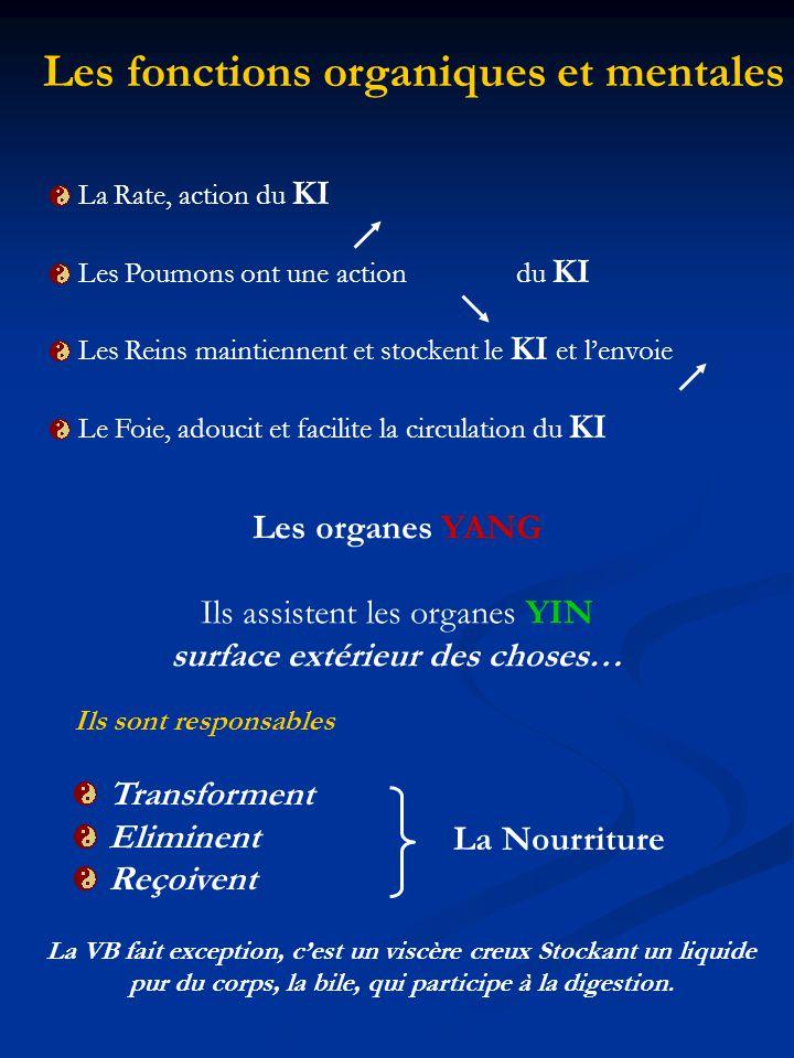 La Rate, action du KI Les Poumons ont une action du KI Les Reins maintiennent et stockent le KI et lenvoie Le Foie, adoucit et facilite la circulation