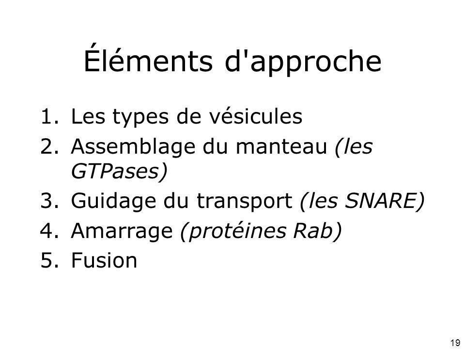 19 Éléments d approche 1.Les types de vésicules 2.Assemblage du manteau (les GTPases) 3.Guidage du transport (les SNARE) 4.Amarrage (protéines Rab) 5.Fusion