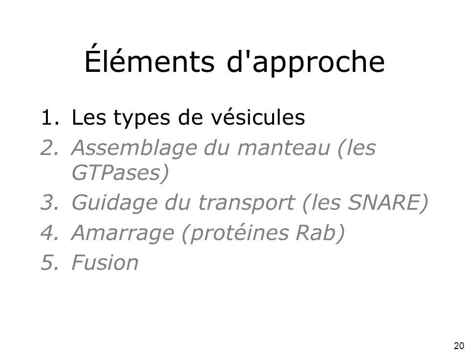 20 Éléments d approche 1.Les types de vésicules 2.Assemblage du manteau (les GTPases) 3.Guidage du transport (les SNARE) 4.Amarrage (protéines Rab) 5.Fusion