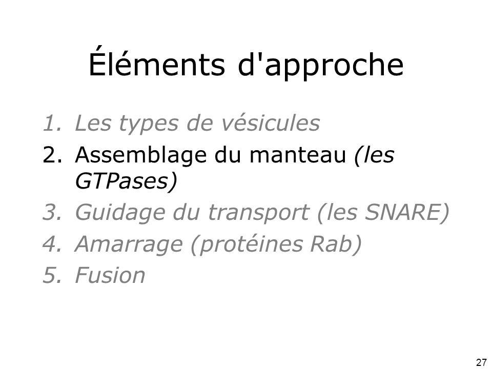 27 Éléments d approche 1.Les types de vésicules 2.Assemblage du manteau (les GTPases) 3.Guidage du transport (les SNARE) 4.Amarrage (protéines Rab) 5.Fusion