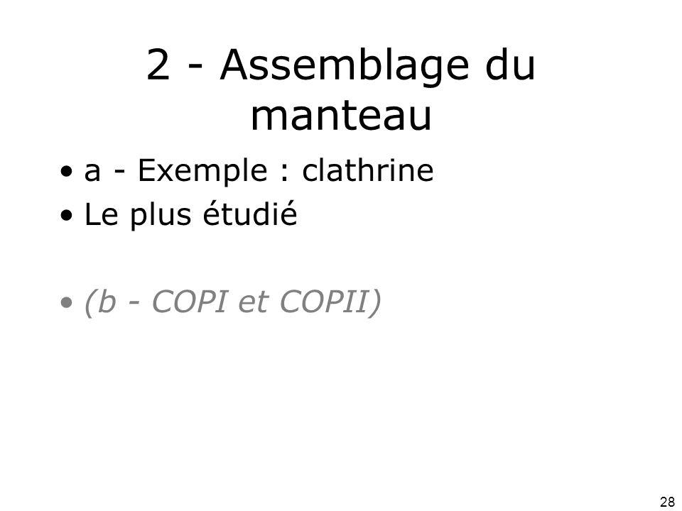 28 2 - Assemblage du manteau a - Exemple : clathrine Le plus étudié (b - COPI et COPII)