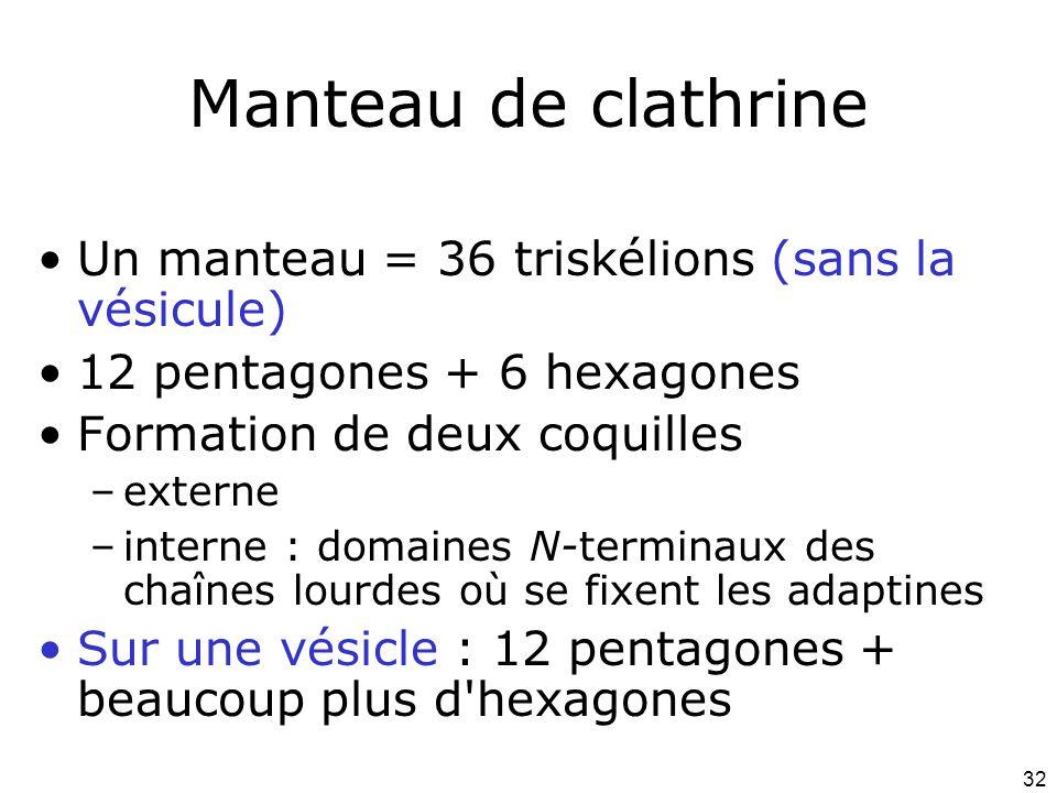 32 Manteau de clathrine Un manteau = 36 triskélions (sans la vésicule) 12 pentagones + 6 hexagones Formation de deux coquilles –externe –interne : domaines N-terminaux des chaînes lourdes où se fixent les adaptines Sur une vésicle : 12 pentagones + beaucoup plus d hexagones