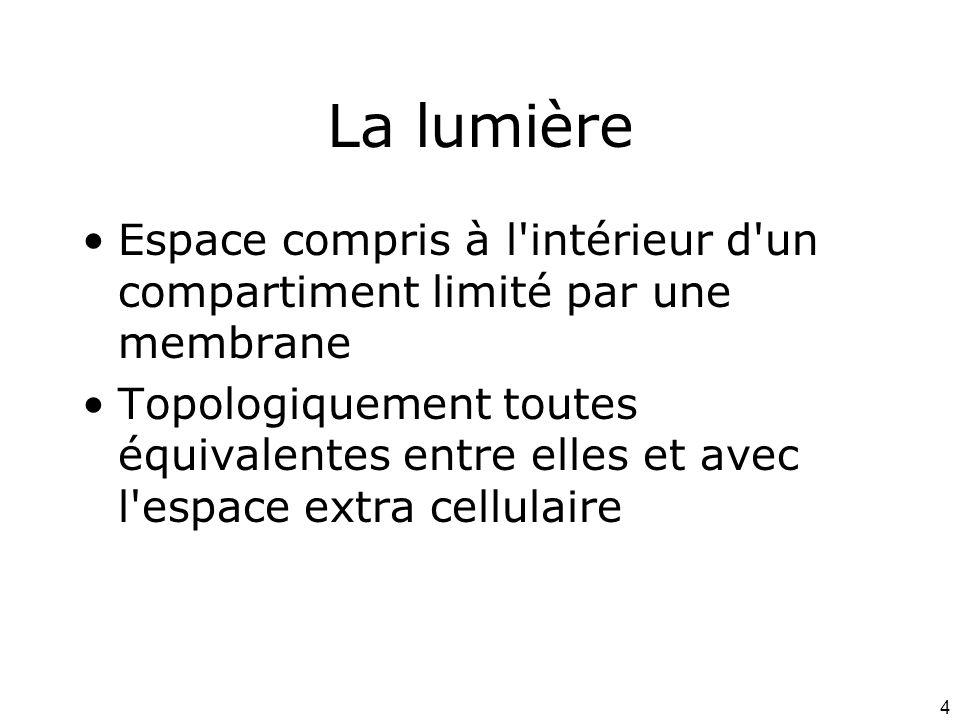 4 La lumière Espace compris à l intérieur d un compartiment limité par une membrane Topologiquement toutes équivalentes entre elles et avec l espace extra cellulaire