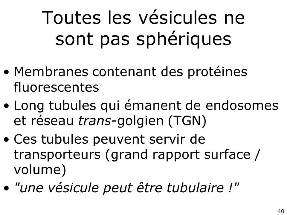 40 Toutes les vésicules ne sont pas sphériques Membranes contenant des protéines fluorescentes Long tubules qui émanent de endosomes et réseau trans-golgien (TGN) Ces tubules peuvent servir de transporteurs (grand rapport surface / volume) une vésicule peut être tubulaire !