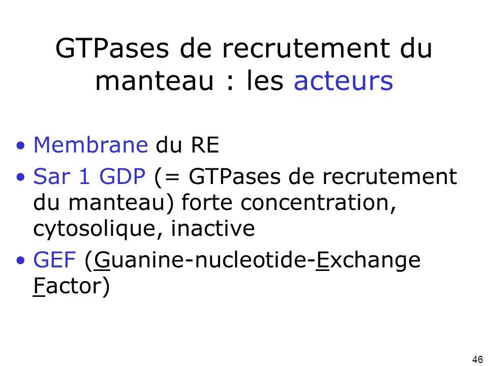 46 GTPases de recrutement du manteau : les acteurs Membrane du RE Sar 1 GDP (= GTPases de recrutement du manteau) forte concentration, cytosolique, inactive GEF (Guanine-nucleotide-Exchange Factor)