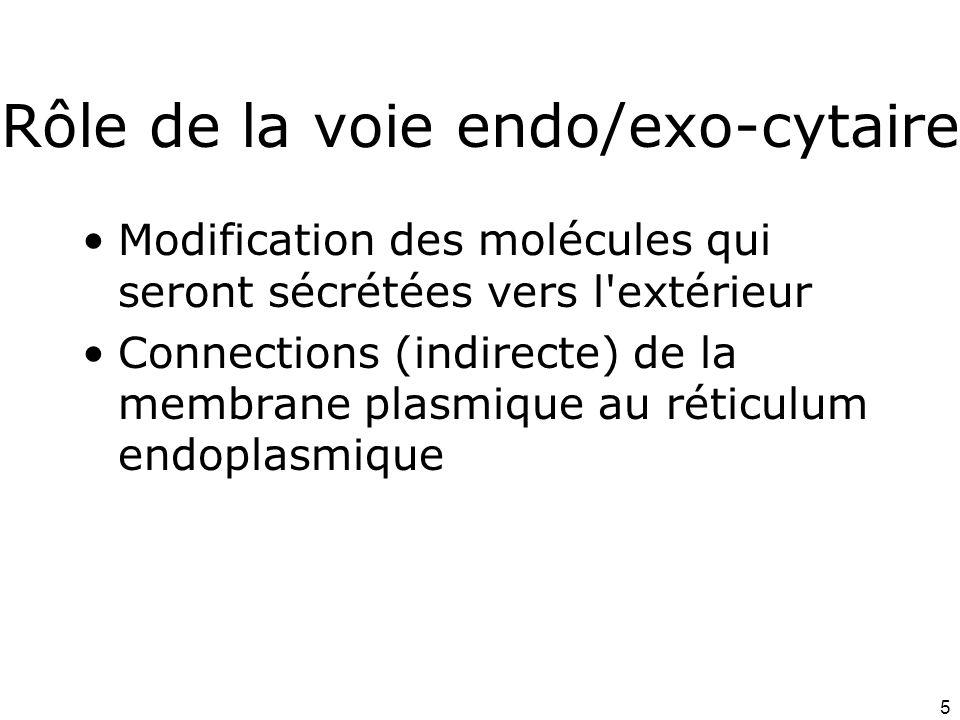 5 Rôle de la voie endo/exo-cytaire Modification des molécules qui seront sécrétées vers l extérieur Connections (indirecte) de la membrane plasmique au réticulum endoplasmique