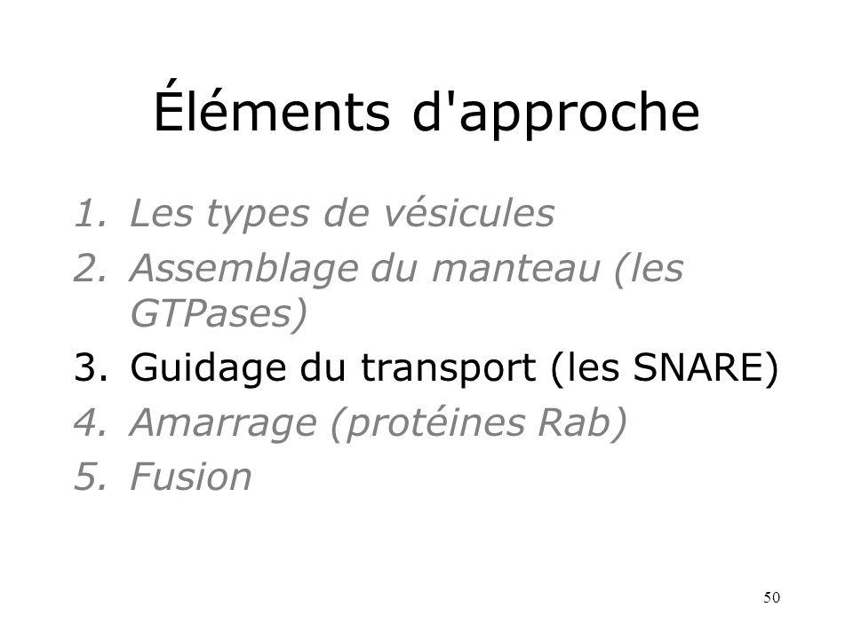50 Éléments d approche 1.Les types de vésicules 2.Assemblage du manteau (les GTPases) 3.Guidage du transport (les SNARE) 4.Amarrage (protéines Rab) 5.Fusion