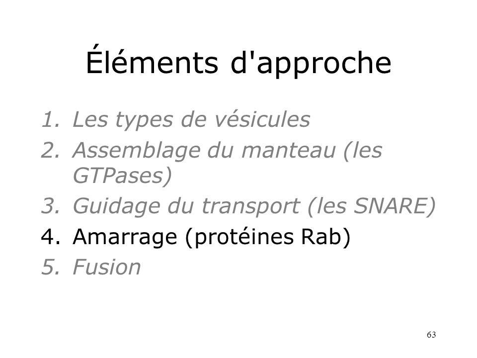 63 Éléments d approche 1.Les types de vésicules 2.Assemblage du manteau (les GTPases) 3.Guidage du transport (les SNARE) 4.Amarrage (protéines Rab) 5.Fusion