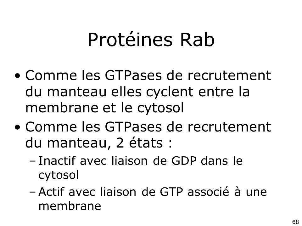 68 Protéines Rab Comme les GTPases de recrutement du manteau elles cyclent entre la membrane et le cytosol Comme les GTPases de recrutement du manteau, 2 états : –Inactif avec liaison de GDP dans le cytosol –Actif avec liaison de GTP associé à une membrane