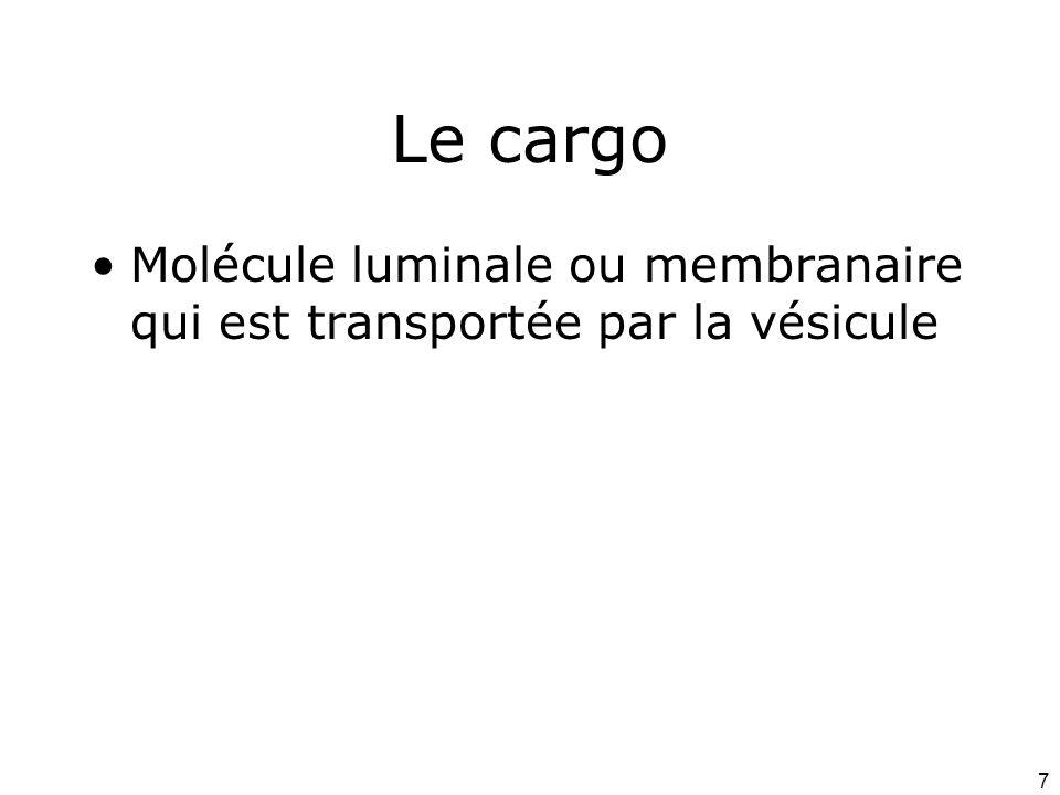 7 Le cargo Molécule luminale ou membranaire qui est transportée par la vésicule