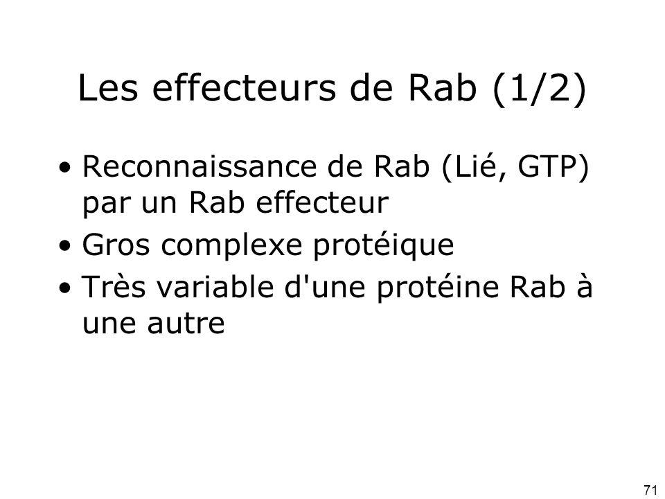 71 Les effecteurs de Rab (1/2) Reconnaissance de Rab (Lié, GTP) par un Rab effecteur Gros complexe protéique Très variable d une protéine Rab à une autre