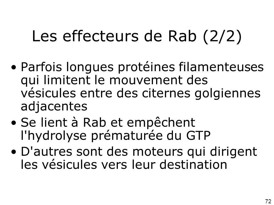 72 Les effecteurs de Rab (2/2) Parfois longues protéines filamenteuses qui limitent le mouvement des vésicules entre des citernes golgiennes adjacentes Se lient à Rab et empêchent l hydrolyse prématurée du GTP D autres sont des moteurs qui dirigent les vésicules vers leur destination