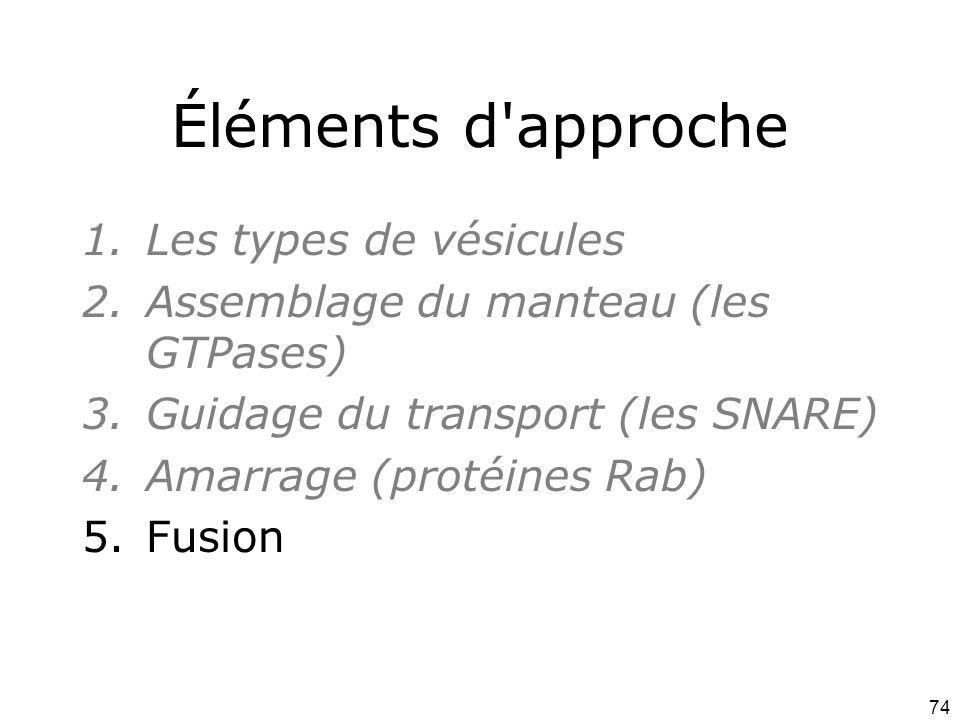 74 Éléments d approche 1.Les types de vésicules 2.Assemblage du manteau (les GTPases) 3.Guidage du transport (les SNARE) 4.Amarrage (protéines Rab) 5.Fusion