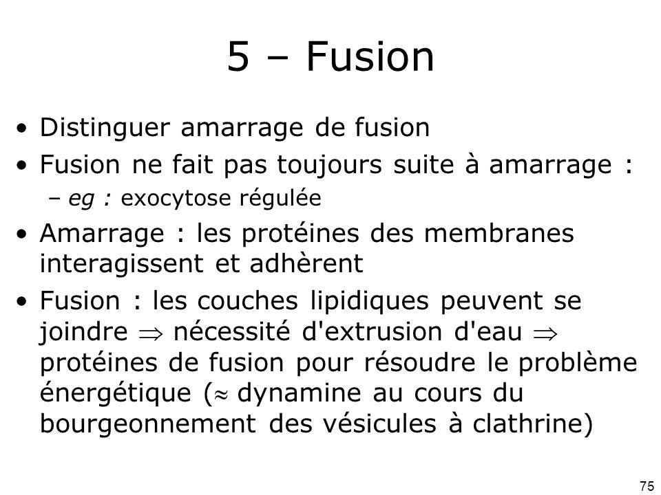 75 5 – Fusion Distinguer amarrage de fusion Fusion ne fait pas toujours suite à amarrage : –eg : exocytose régulée Amarrage : les protéines des membranes interagissent et adhèrent Fusion : les couches lipidiques peuvent se joindre nécessité d extrusion d eau protéines de fusion pour résoudre le problème énergétique ( dynamine au cours du bourgeonnement des vésicules à clathrine)