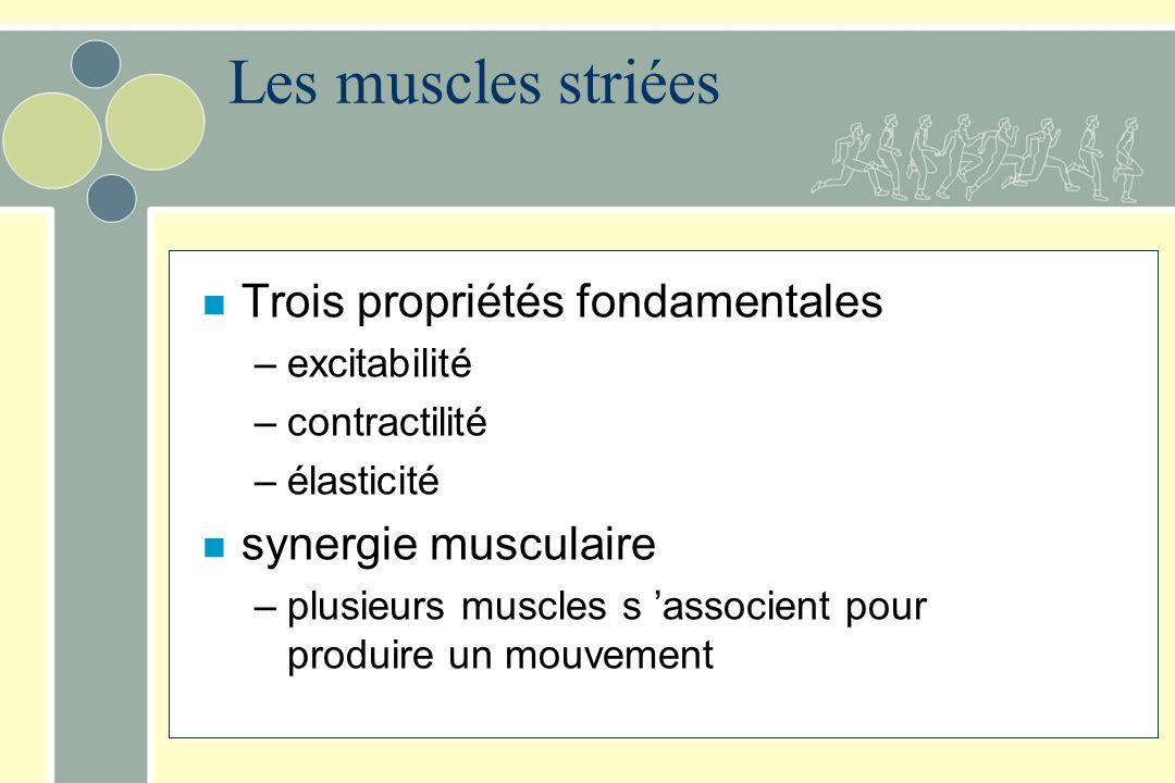 Les muscles striées n Trois propriétés fondamentales –excitabilité –contractilité –élasticité n synergie musculaire –plusieurs muscles s associent pou