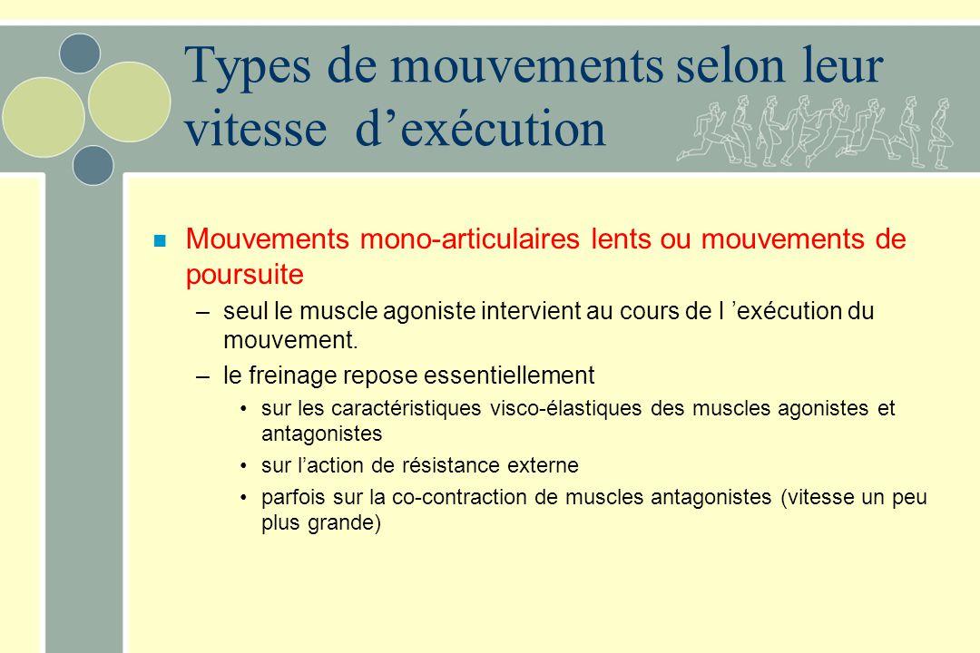 Types de mouvements selon leur vitesse dexécution n Mouvements mono-articulaires lents ou mouvements de poursuite –seul le muscle agoniste intervient