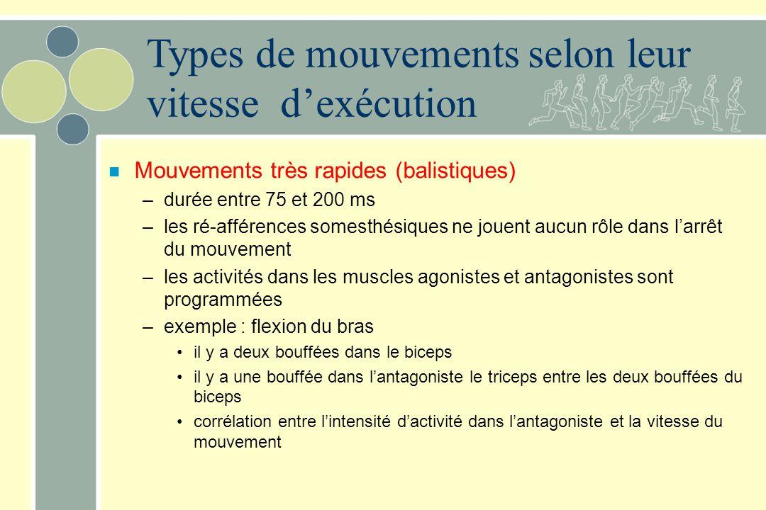 n Mouvements très rapides (balistiques) –durée entre 75 et 200 ms –les ré-afférences somesthésiques ne jouent aucun rôle dans larrêt du mouvement –les