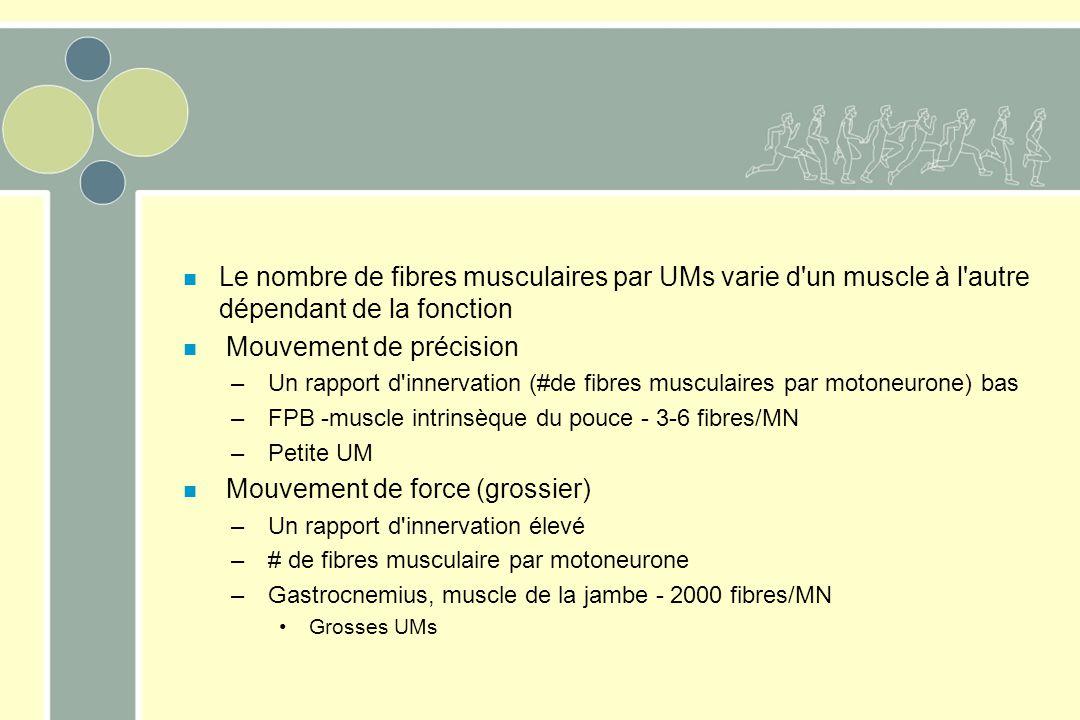 n Le nombre de fibres musculaires par UMs varie d'un muscle à l'autre dépendant de la fonction n Mouvement de précision – Un rapport d'innervation (#d