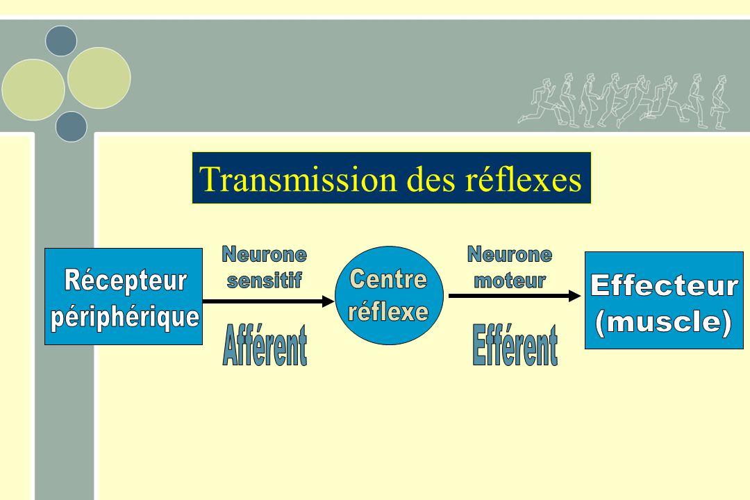 Transmission des réflexes