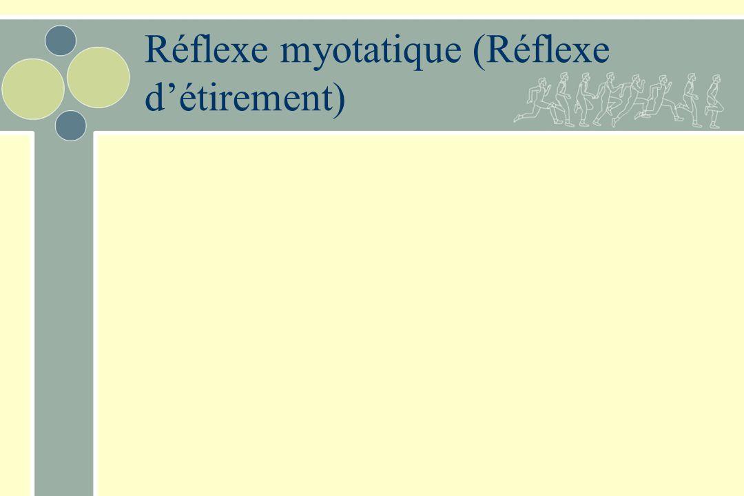 Réflexe myotatique (Réflexe détirement)