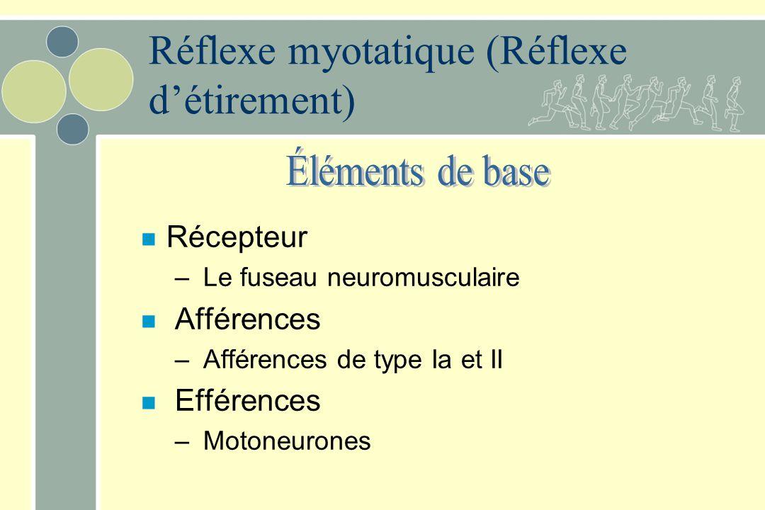 n Récepteur – Le fuseau neuromusculaire n Afférences – Afférences de type Ia et II n Efférences – Motoneurones Réflexe myotatique (Réflexe détirement)