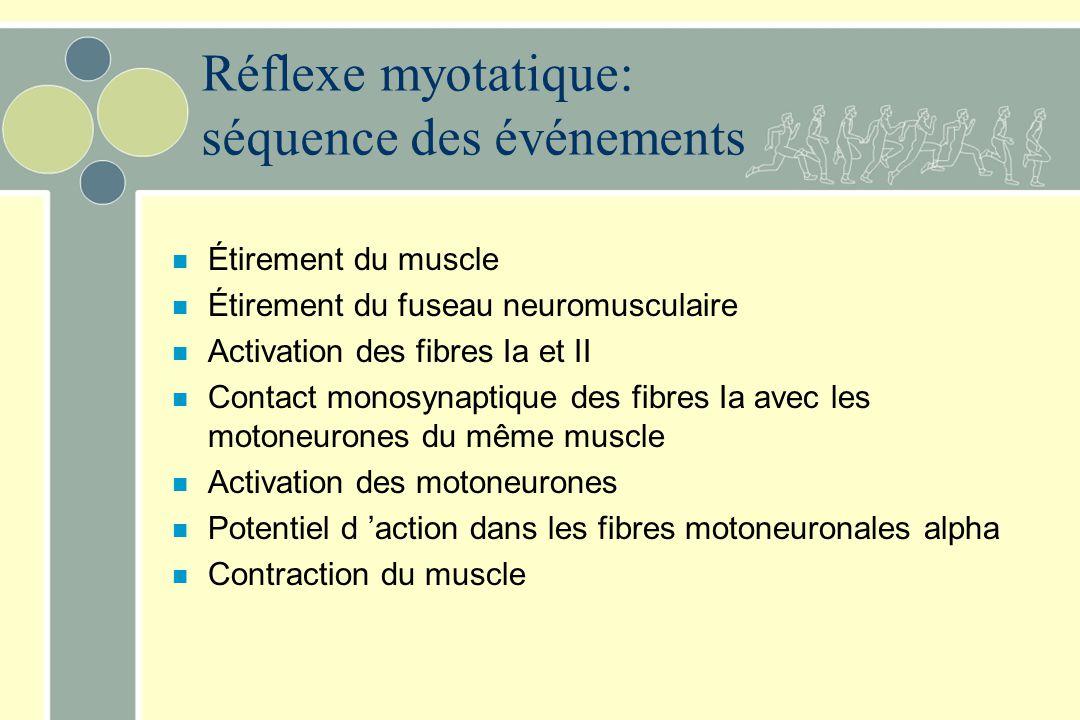 Réflexe myotatique: séquence des événements n Étirement du muscle n Étirement du fuseau neuromusculaire n Activation des fibres Ia et II n Contact mon
