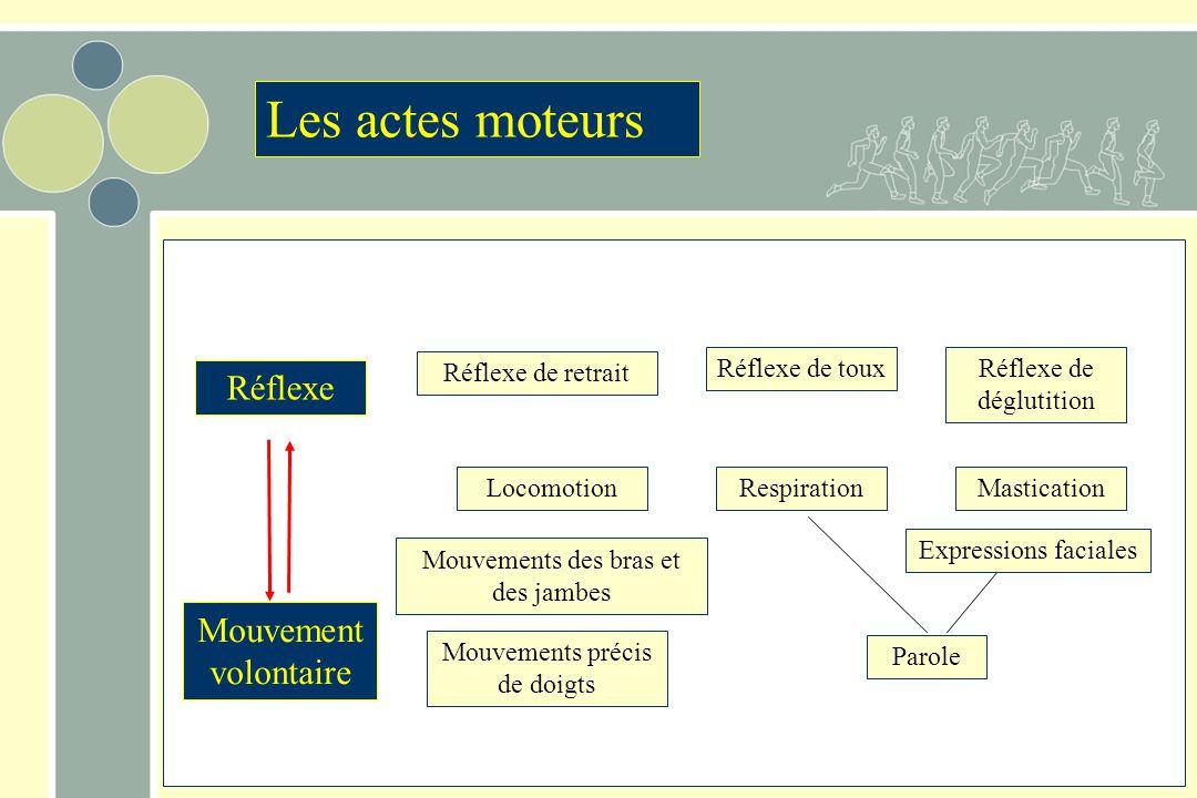 Réflexe Mouvement volontaire Les actes moteurs Respiration Réflexe de toux Mouvements précis de doigts Mouvements des bras et des jambes Locomotion Ré