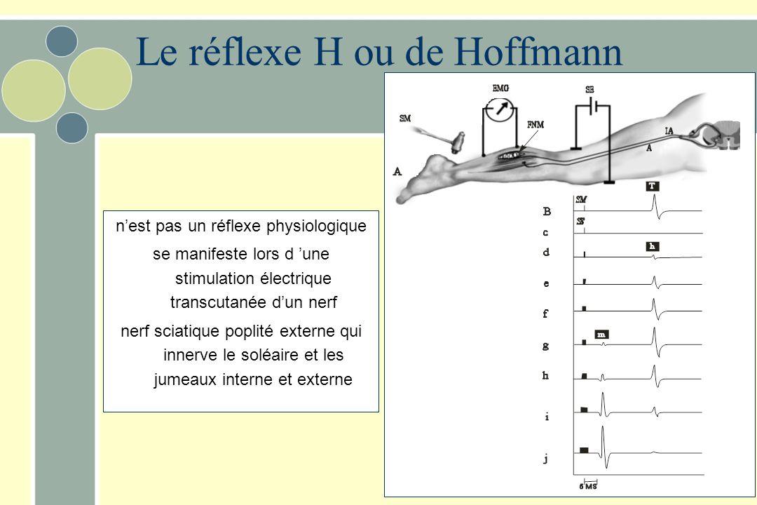 Le réflexe H ou de Hoffmann nest pas un réflexe physiologique se manifeste lors d une stimulation électrique transcutanée dun nerf nerf sciatique popl