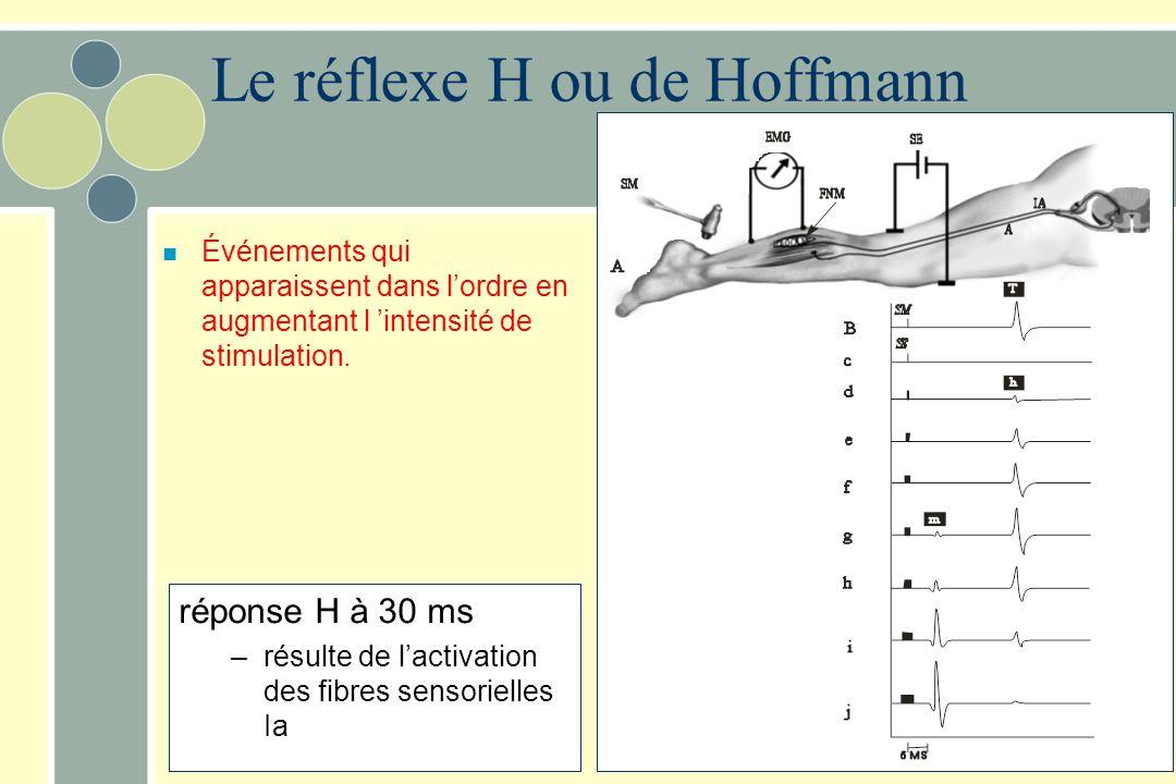 réponse H à 30 ms –résulte de lactivation des fibres sensorielles Ia n Événements qui apparaissent dans lordre en augmentant l intensité de stimulatio