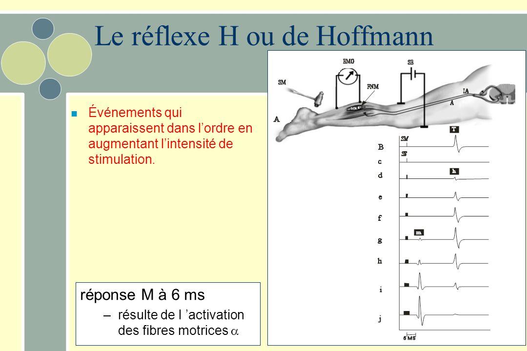réponse M à 6 ms –résulte de l activation des fibres motrices n Événements qui apparaissent dans lordre en augmentant lintensité de stimulation. Le ré