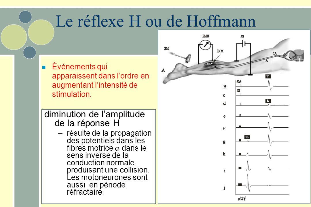 diminution de lamplitude de la réponse H –résulte de la propagation des potentiels dans les fibres motrice dans le sens inverse de la conduction norma